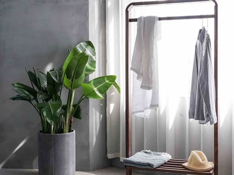 Flowerpot, Houseplant, Room, Curtain, Vase, Interior design, Plant, Textile, Furniture, Linens,