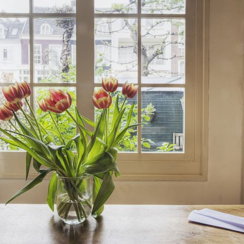 Tulips in vase on table by window