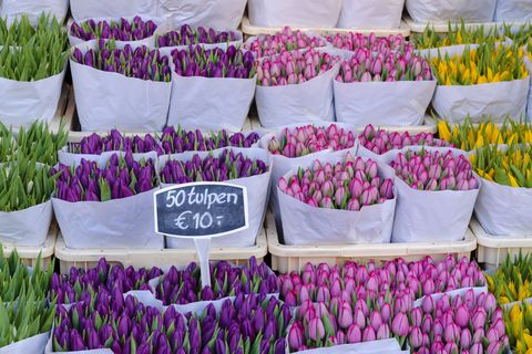 Amsterdam cruise - Tulips on sale at the Bloemenmakrt Flower Market in Amsterdam