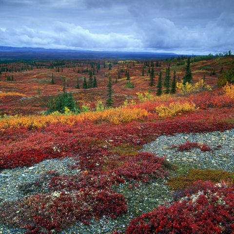 Tundra showing its autumn colours.