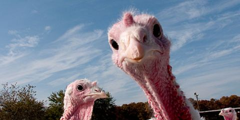 Turkey Is Curious