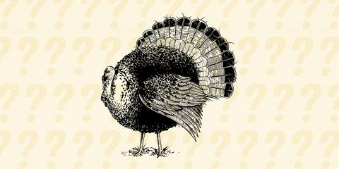 turkey-cat-box-riddle.jpg