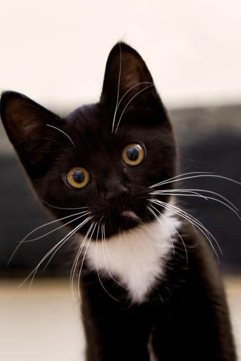 Rosie black cat names