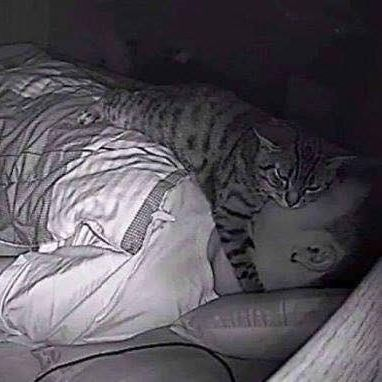 Twitter Cat Is Seen on Camera Sleeping on Top of Owner Making It Difficult to Breathe