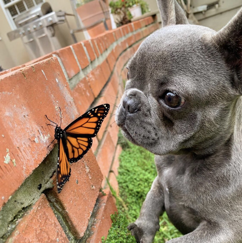 Twitter WeRateDogs Mochi Butterfly Friend