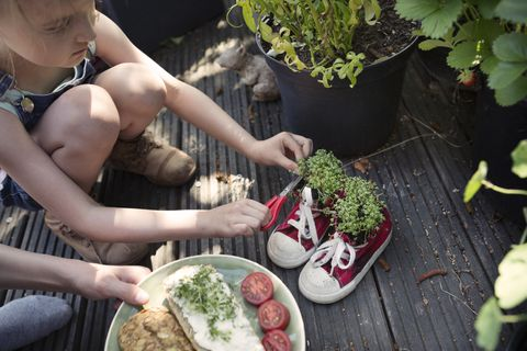 two children harvesting cress from plants grown in recycled shoes, to add to a vegetarian sandwich