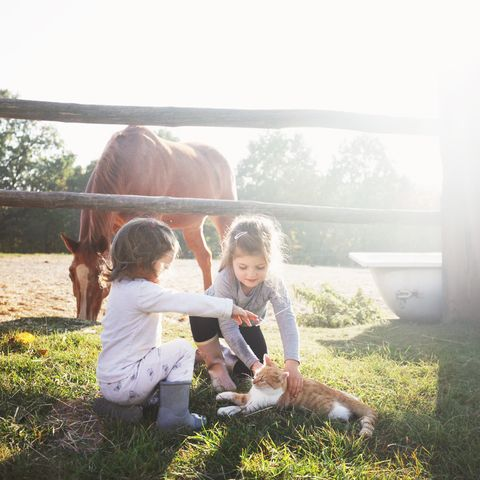 two girls playing with cat on a horse farm
