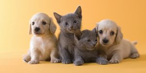 Pet insurance helps protect your pets - and your bank balance!