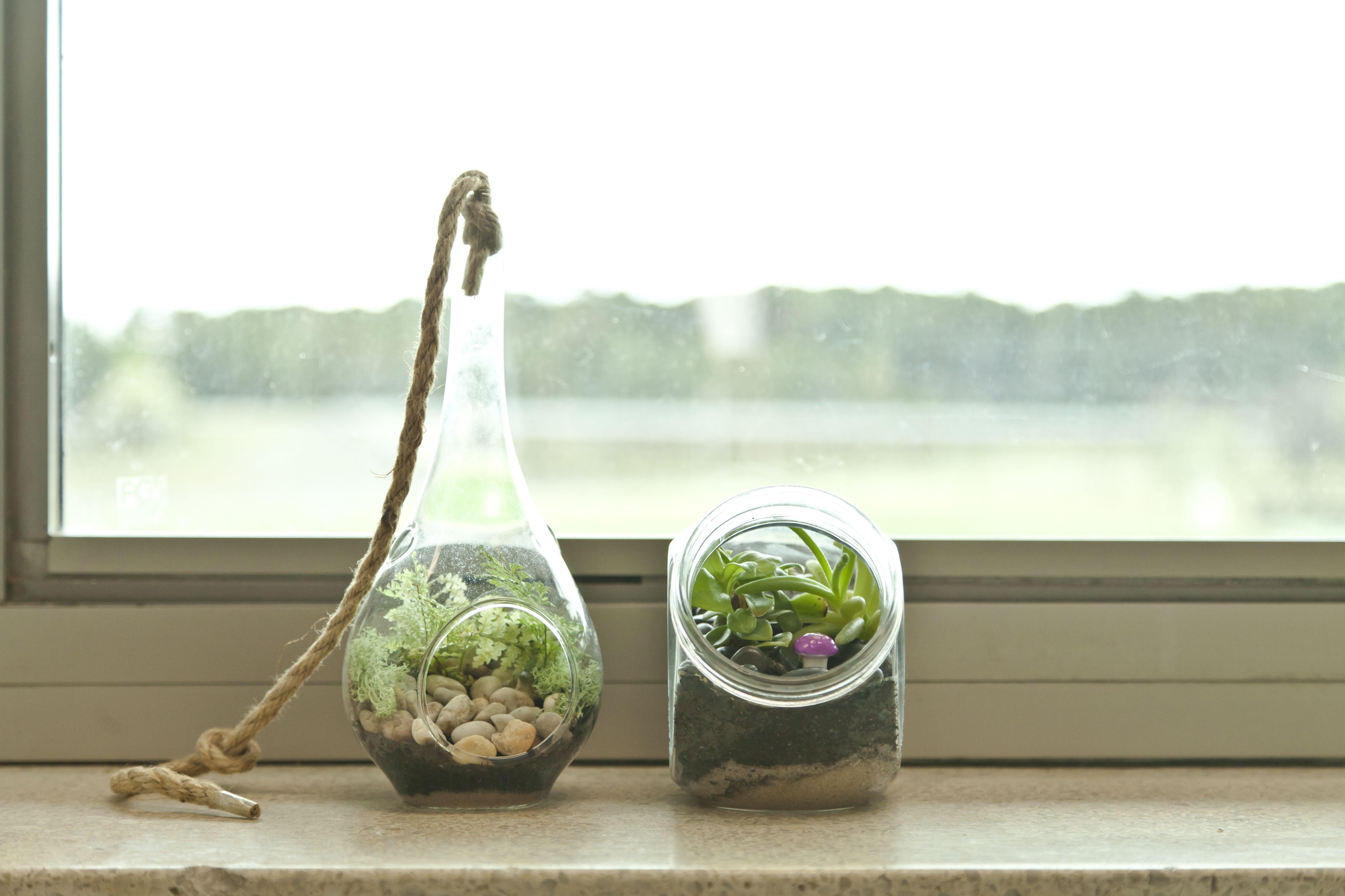 20 Best Terrarium Plants How To Plant A Terrarium