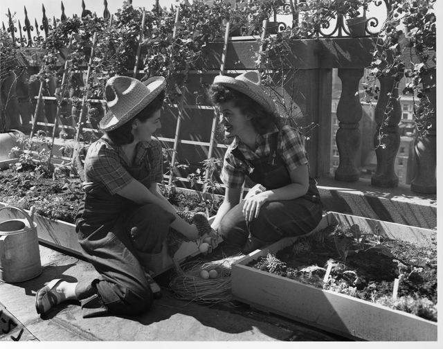 college students at a victory garden
