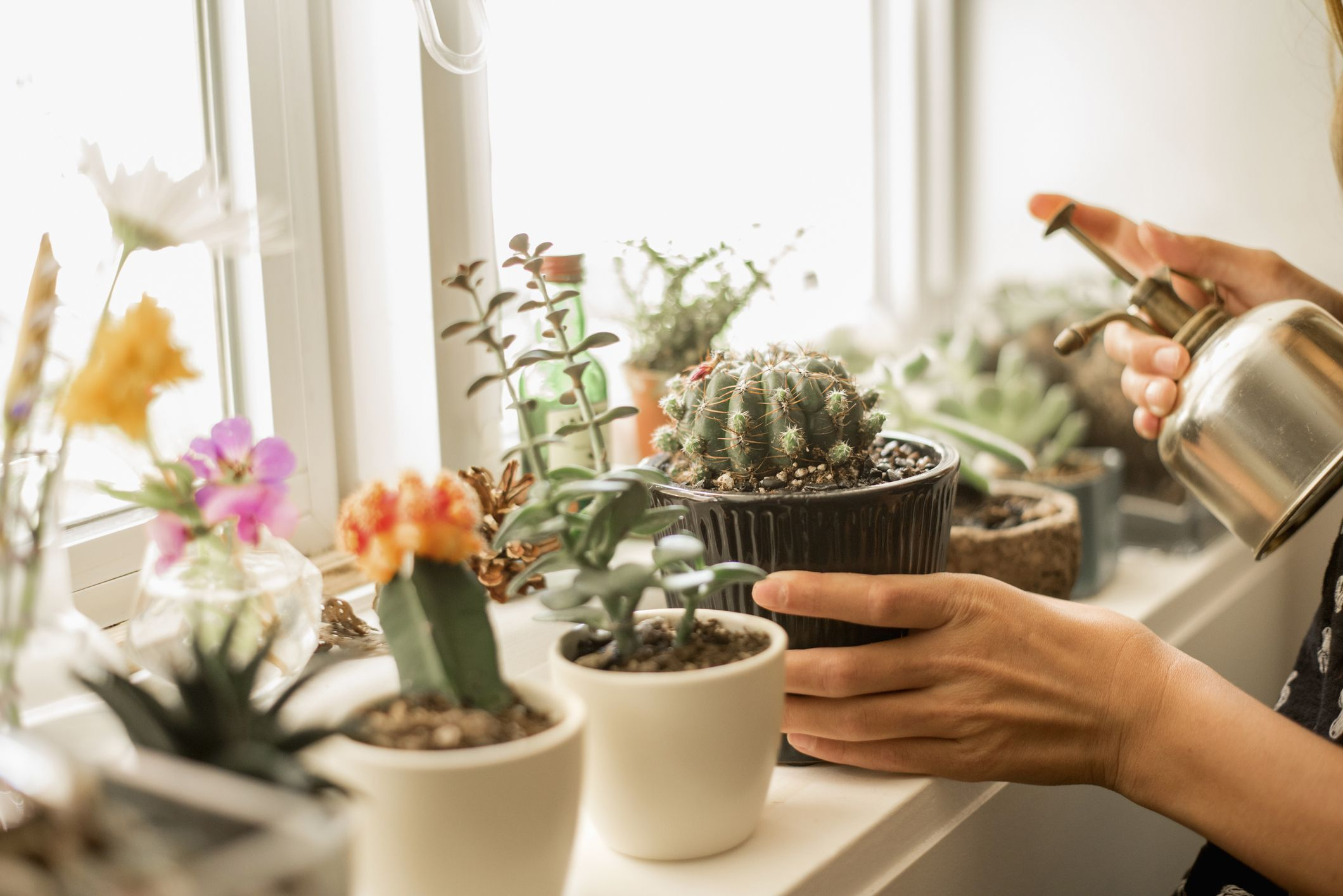 Diffe Types Of Indoor Cactus