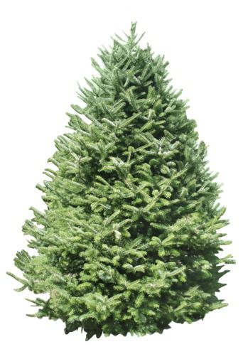 types of Christmas trees balsam fir