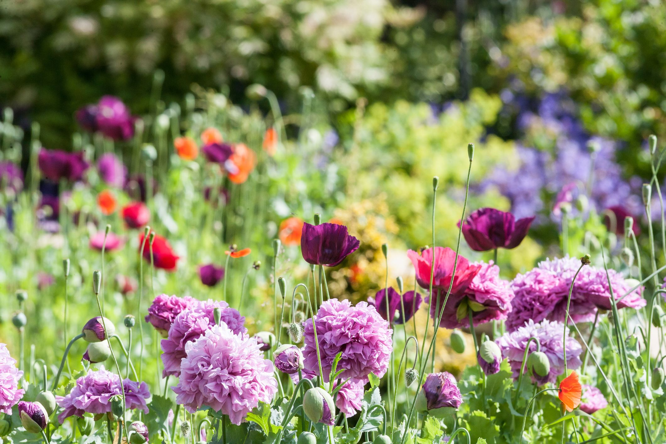 55 Best Types of Flowers \u2013 Pretty Pictures of Garden Flowers