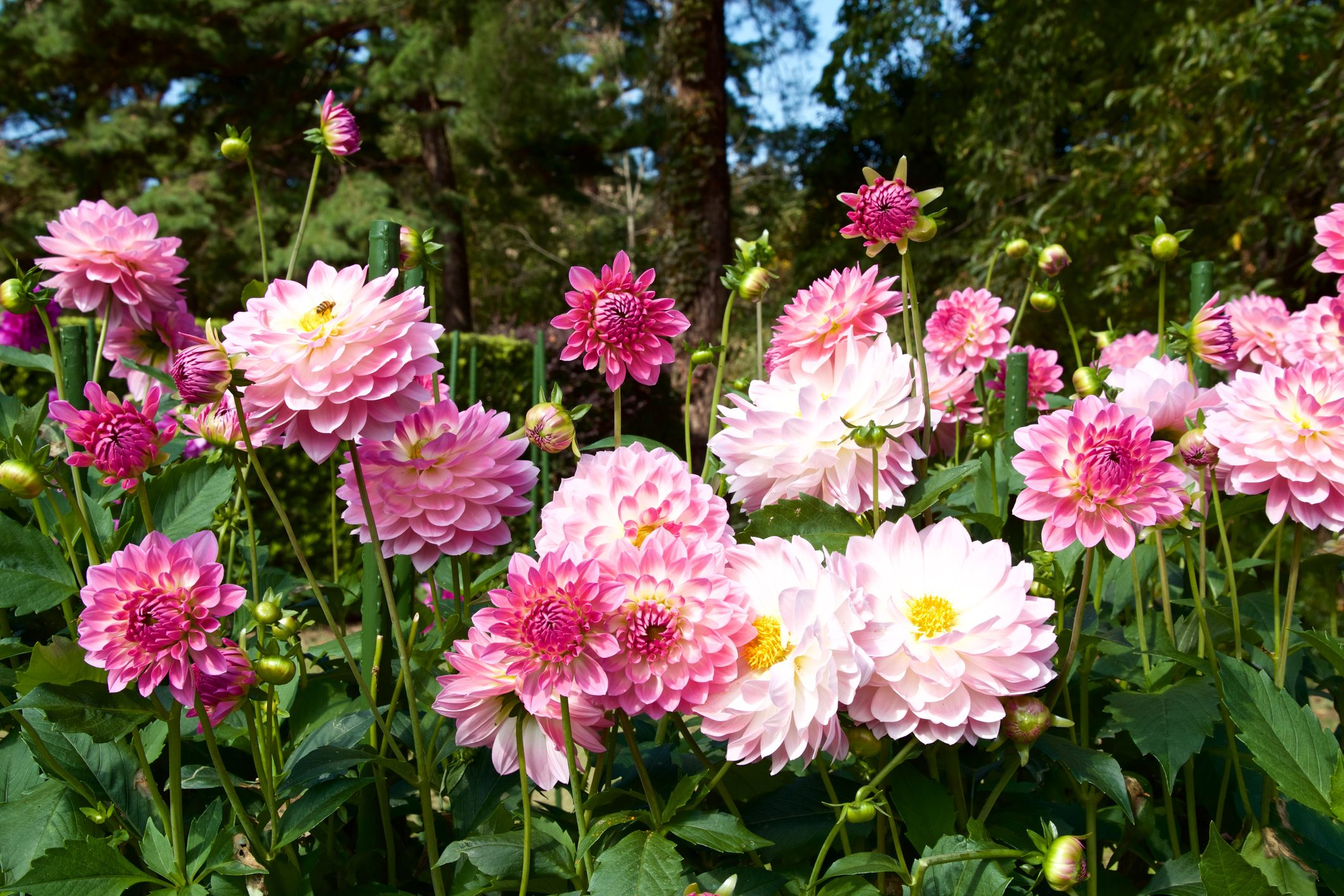 55 Types of Flowers You Should Have in Your Garden