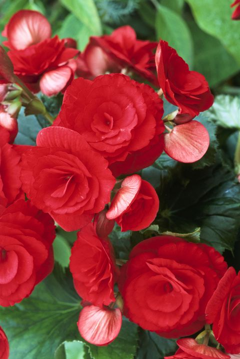 55 best types of flowers pretty pictures of garden flowers begnoia mightylinksfo