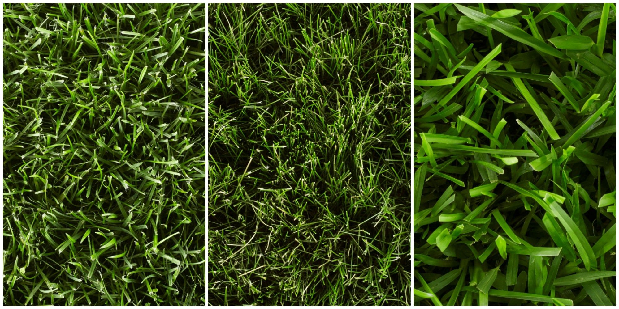types of grass - how to grow grass