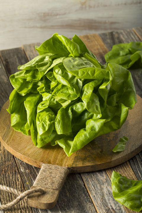 Raw Green Organic Boston Butter Lettuce