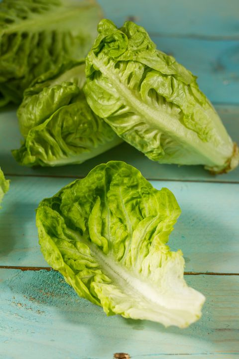 types of lettuce romaine