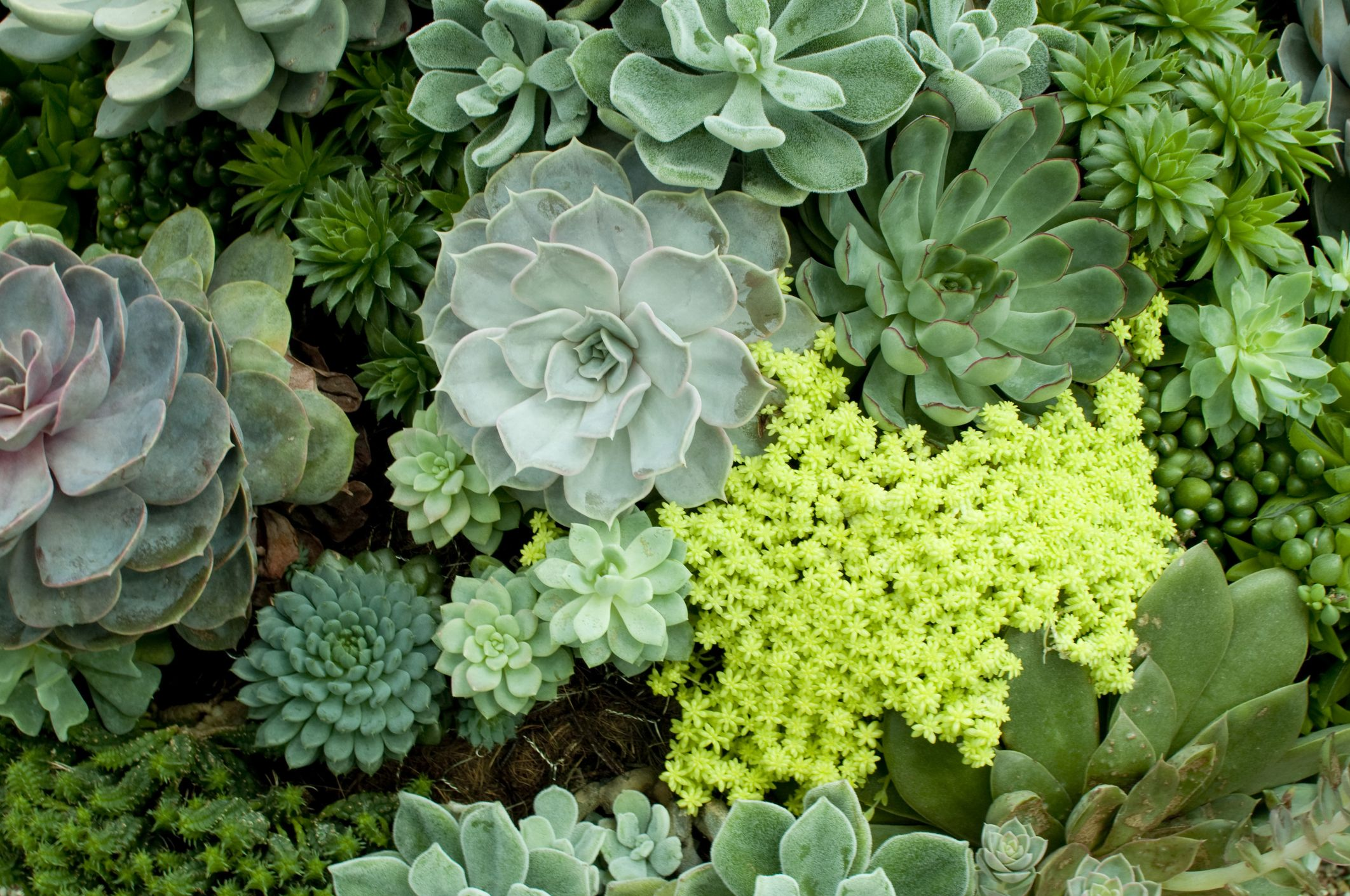 25 Best Succulent Plant Types Different Kinds Of Succulents List