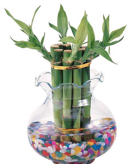 el bambú de la suerte queda perfecto en un arreglo floral para vestir mesas
