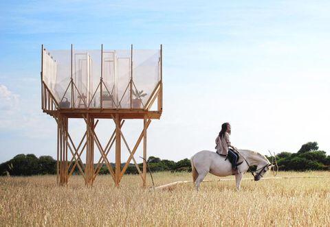 Human, Sky, Horse supplies, Bridle, Horse, Working animal, Halter, Horse tack, Plain, Field,