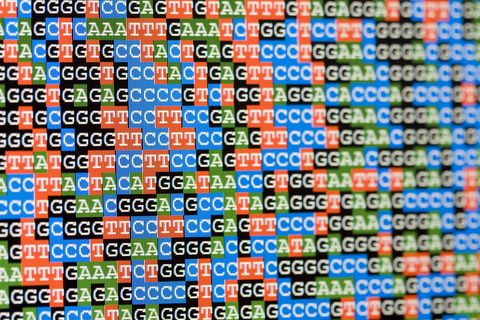 unaligned dna sequences viewed on lcd screen