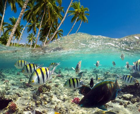 underwater scene with tropical fishes snorkeling in the tropical sea