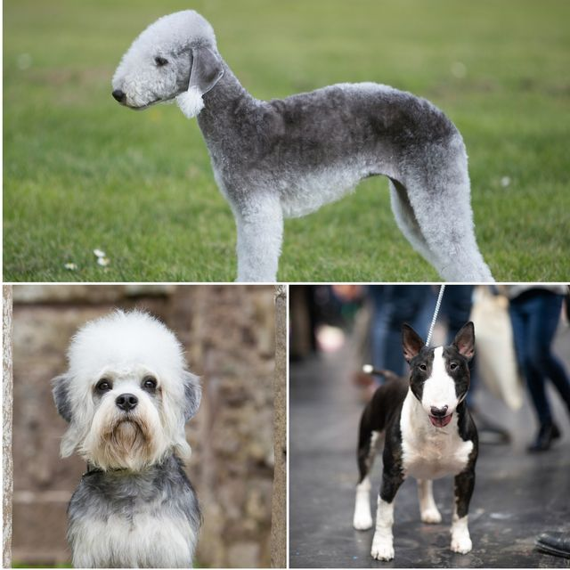 8 unusuallooking dog breeds that are still super cute