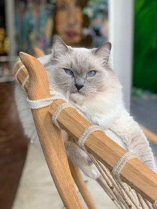 Artist Fischer Cherry's Tribeca Loft Was Inspired by a Cat