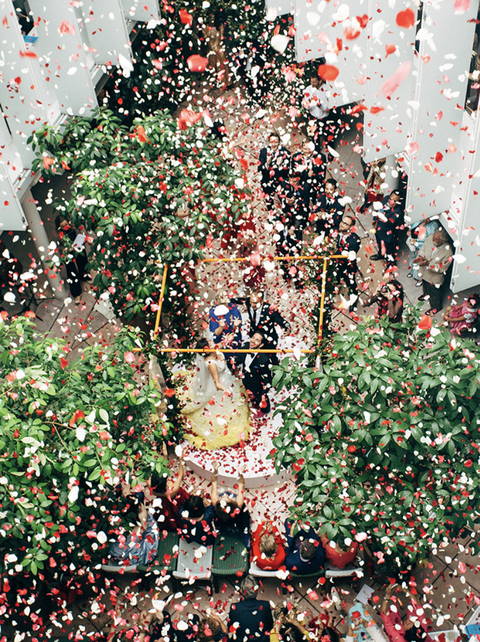 Plant, Tree, Confetti, Flower, Crowd,
