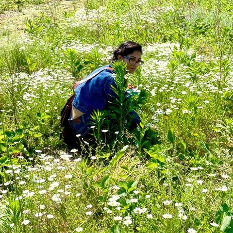 strawberry picking out east in the north fork, long island on opening weekend, june 2021