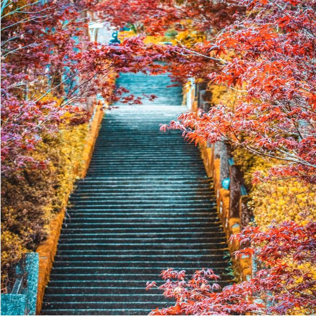 【2020賞楓景點推薦】精選7個台灣絕美賞楓景點!不用出國就能拍出電影場景