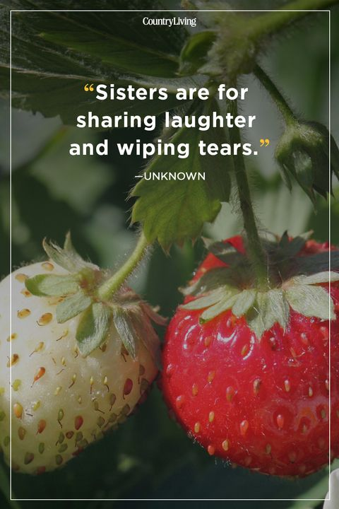 20 Best Sister Quotes Quotes About Sisters