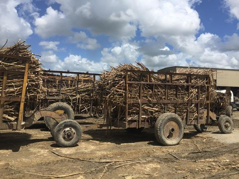 Logging, Vehicle, Motor vehicle, Transport, Wood, Mode of transport, Automotive tire, Wheel, Tree, Tire,