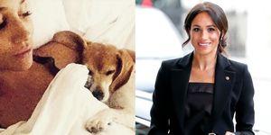 梅根王妃和小狗