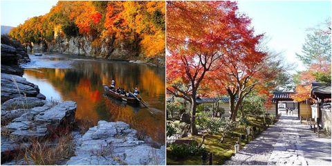Tree, Nature, Natural landscape, Autumn, Leaf, Woody plant, Plant, State park, Bank, Sky,