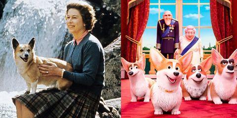 英國女王傷心告別皇室最後一隻柯基:「我不想死後留下孤單的幼犬」,《女王的柯基》背後的故事會哭死你!