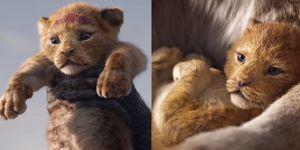 《獅子王》真人版預告釋出,毛茸茸的辛巴也太萌!等了20年,被這一首背景音樂逼哭