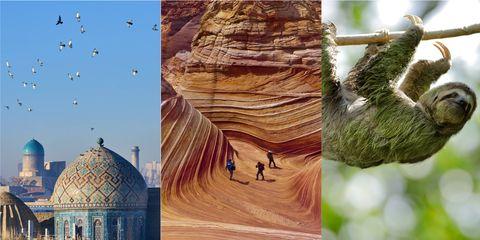 Tree, Adaptation, Collage, Plant, Art, Rock, Tourism,