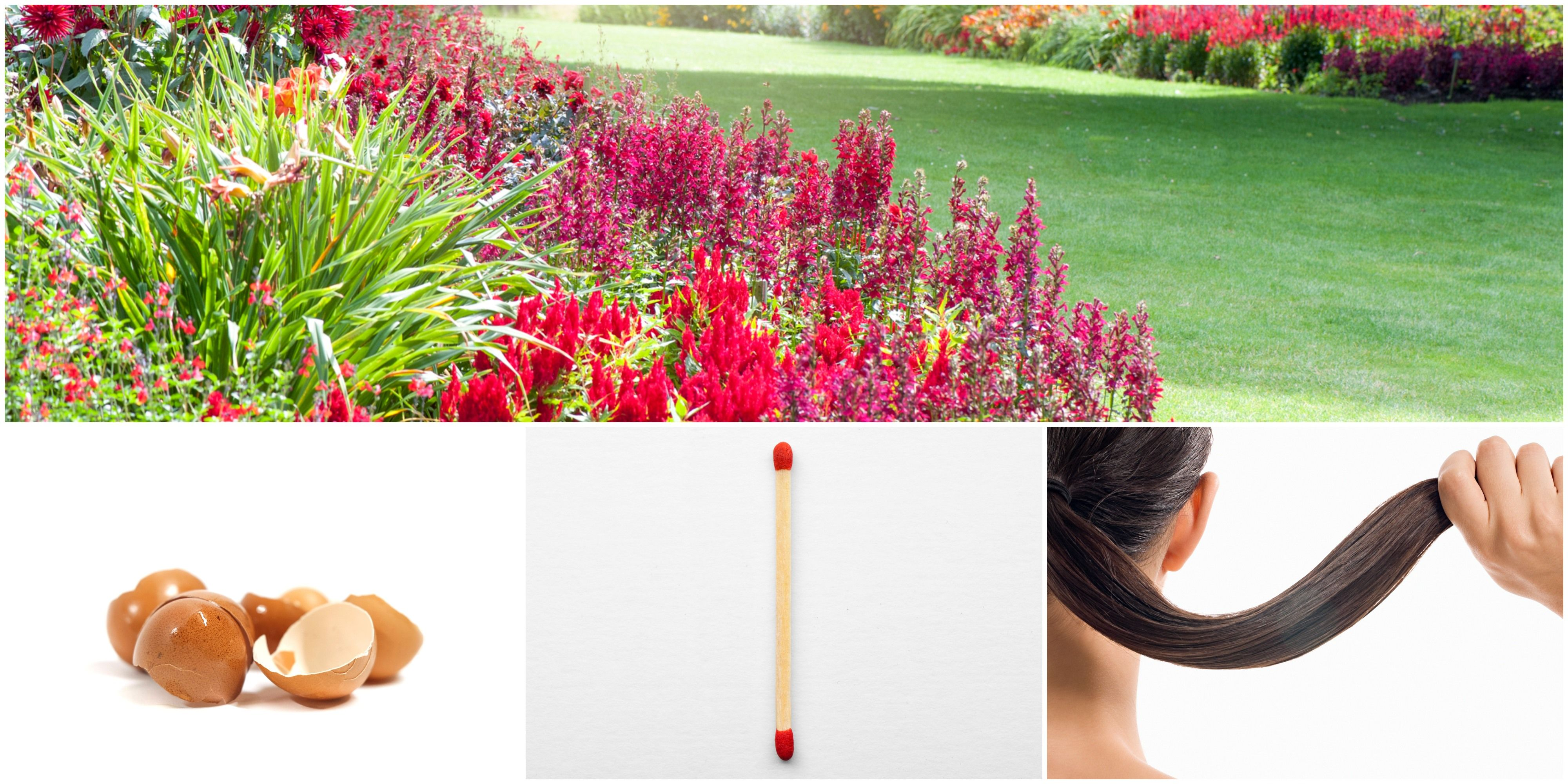 Unusual Household Items Good For Gardening