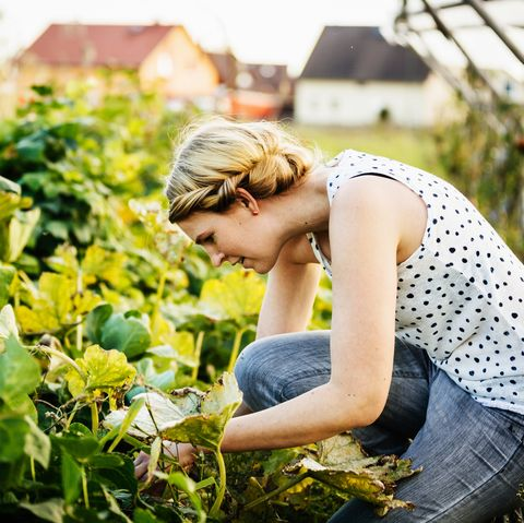 Urban Farmer Delicately Taking Care Of Her Crops