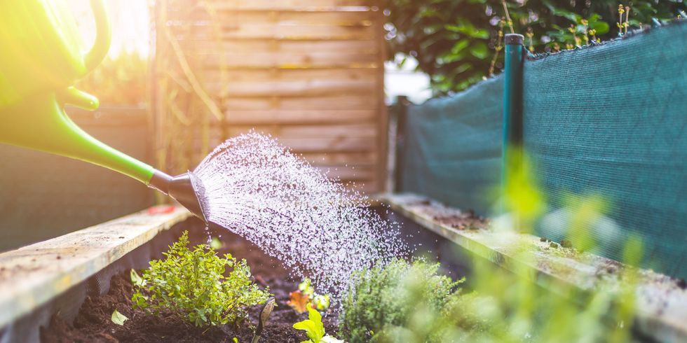 5 positive changes you can make to your garden in 2021