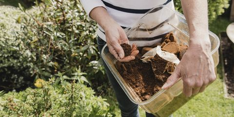 using coffee as compost