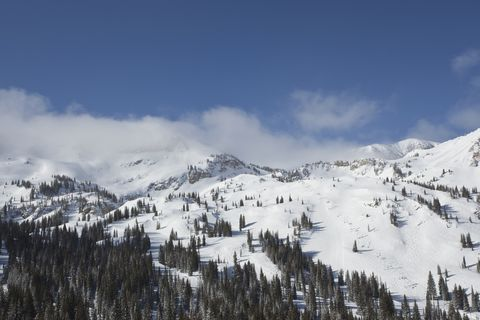usa, utah, alta, forest in snow covered mountains