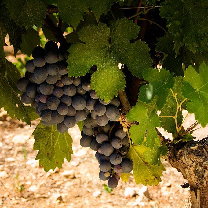 Hemos descubierto una nueva razón para amar (aún más) el vino