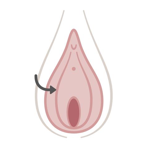 To 🏷️ vagina how tongue 💡 Objects