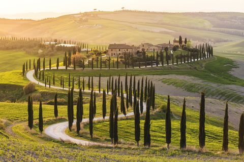 valdorcia, siena, tuscany road of cypresses in a farmhouse at sunset