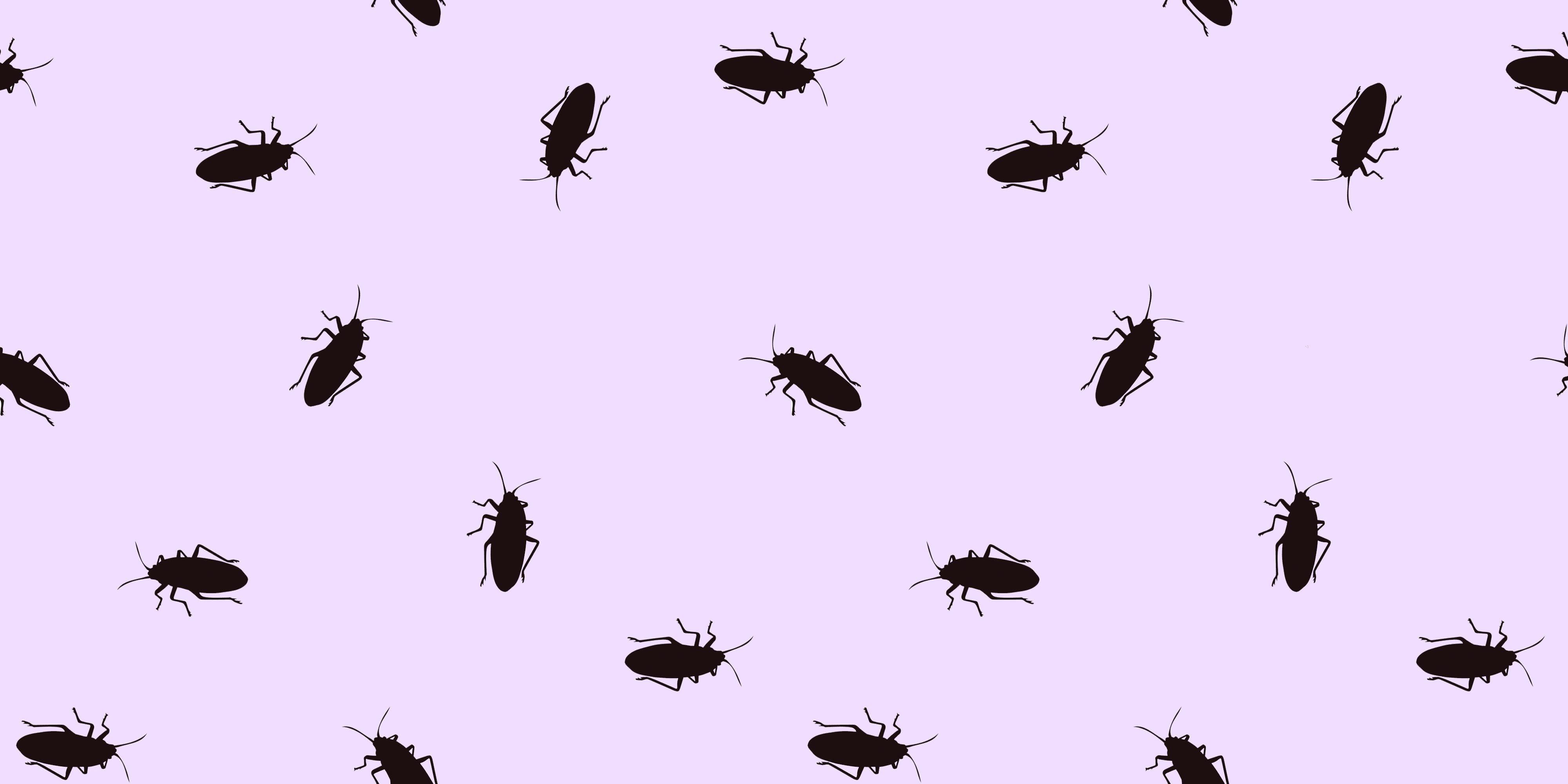 Deze dierentuin laat je een kakkerlak naar je ex vernoemen
