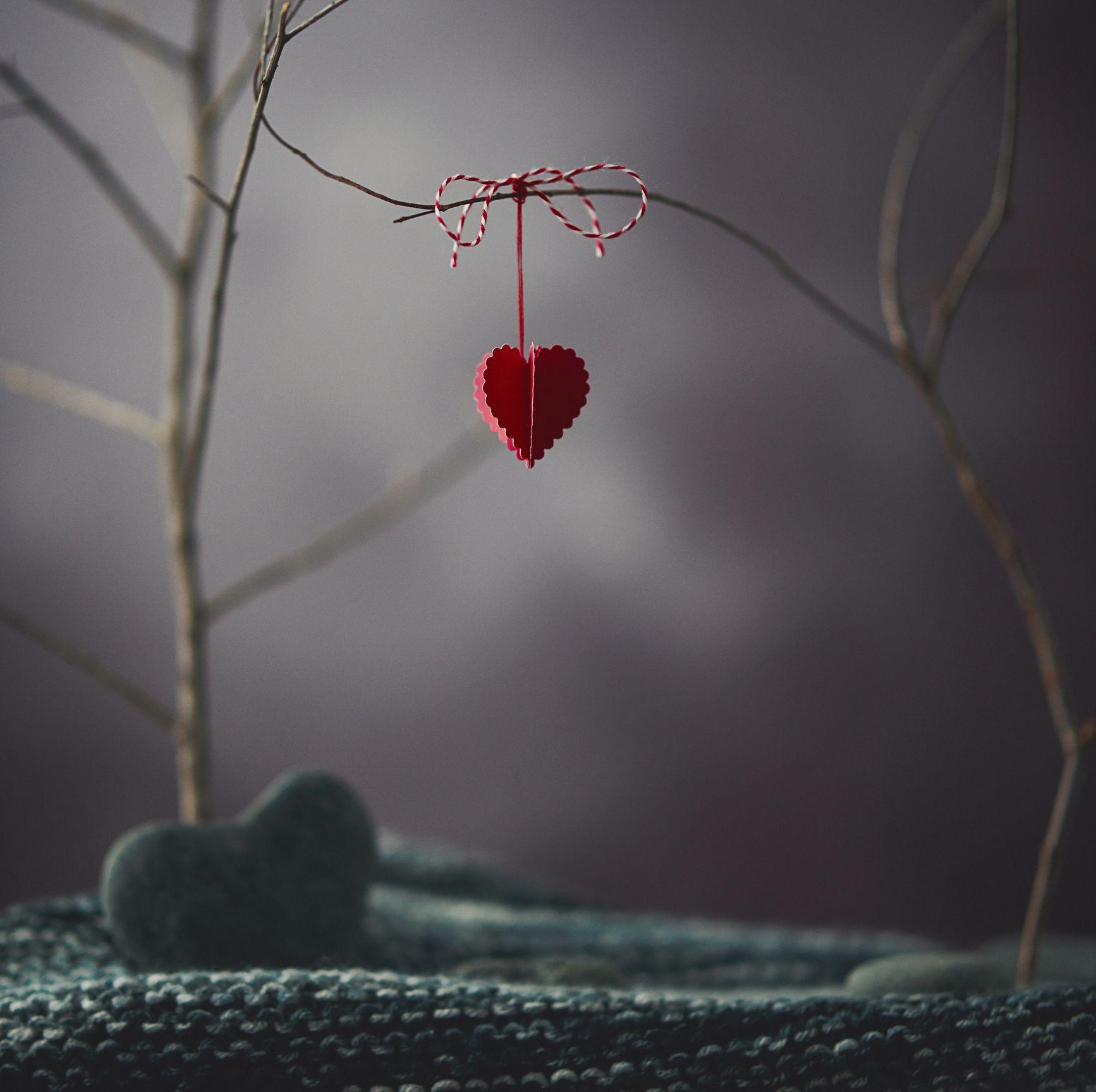 valentine, hjerte, hengende, på, kvist trær