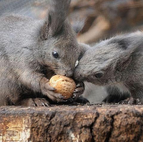 valentines-jokes-squirrels